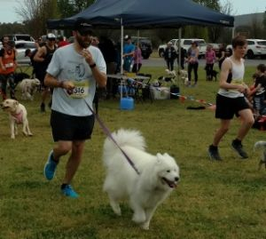 Barkers bounce to Dog Jog